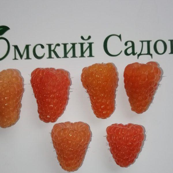 Питомник Омский Садовод